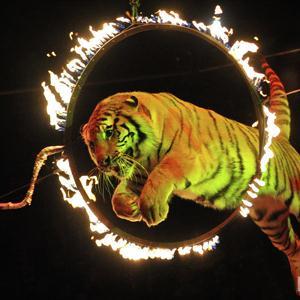 Цирки Узловой