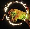Цирки в Узловой