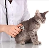 Ветеринарные клиники в Узловой